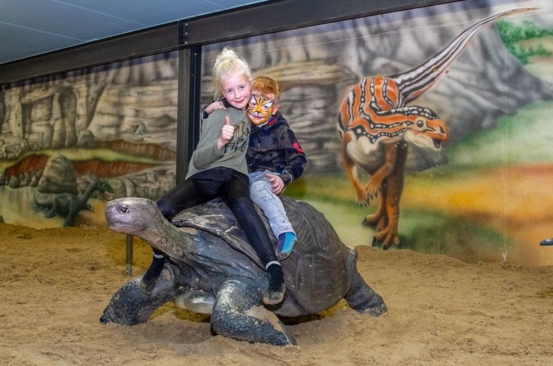 Schildkröte im Sandkasten